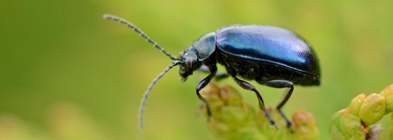 http://www.suzukibandit.cz/openforum/uploads/17_62976_hmyz-do-100-let-kompletne-zmizi-z-povrchu-zemskeho-tvrdi-vedci.jpg