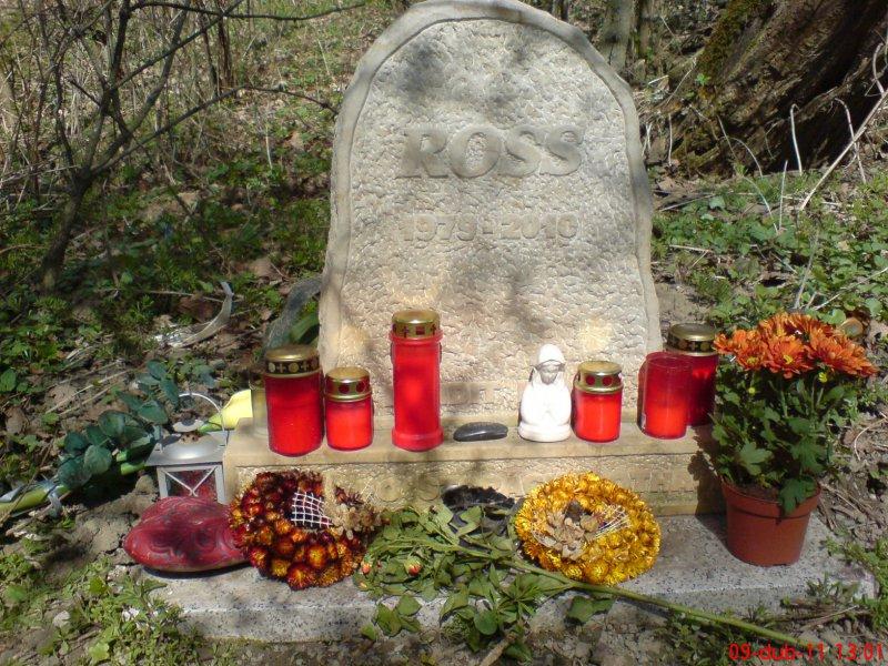 http://www.suzukibandit.cz/openforum/uploads/39_ross2.jpg
